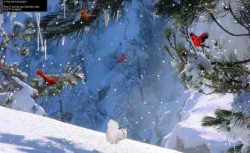 Free Winter Pictures Wallpaper