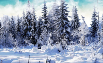 Free Winter Wallpaper for iPad