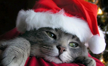 Funny Cat Christmas Wallpaper