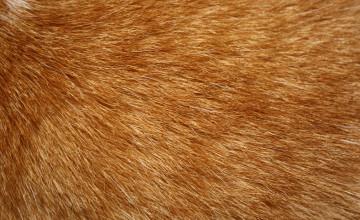 Fur Wallpaper