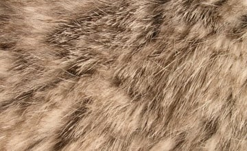 Furry iPhone Wallpaper