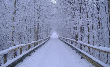Google Winter Wallpaper and Screensavers