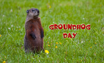 Groundhog Wallpaper