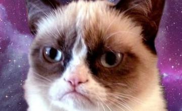 Grumpy Cat Galaxy Wallpaper