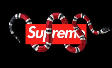 Gucci iPhone Wallpaper Supreme