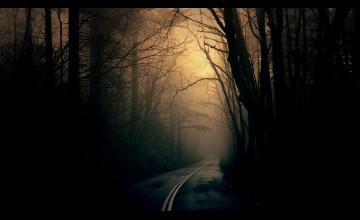 HD Dark Forest Wallpaper