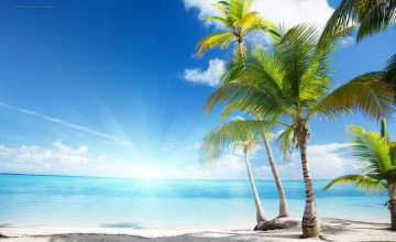 HD Palm Tree Wallpapers