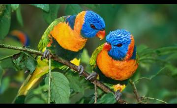 HD Parrot Wallpaper