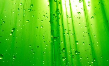 HD Wallpaper Green