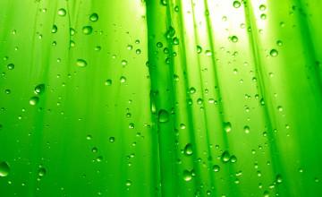 HD Wallpaper Green