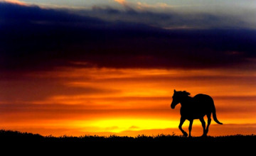 Horses at Sunset Wallpapers