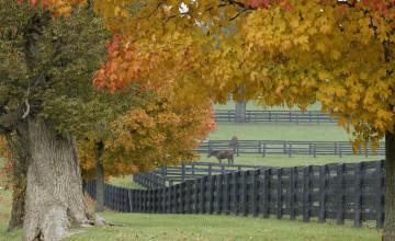 Horses in Autumn Desktop Wallpaper