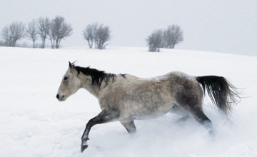 Horses in the Snow Wallpaper