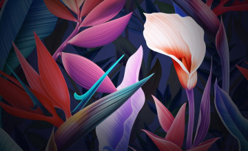 Huawei Mate 10 Wallpapers