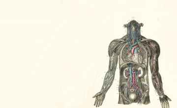 Human Anatomy Wallpaper