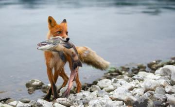 Hunting and Fishing Wallpaper