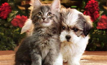 Images Kittens and Puppies Wallpapers
