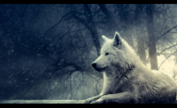 Images of Wolves for Wallpapers