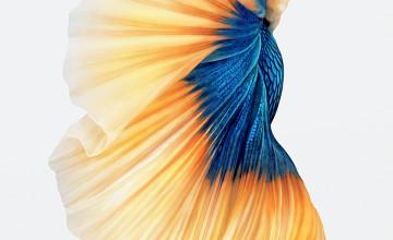 iOS 9 Fish Wallpaper