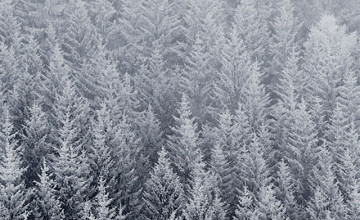 iPhone Winter Tree Wallpaper