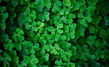 Irish Clover Wallpaper