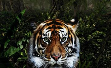 Jungle Animal Wallpaper