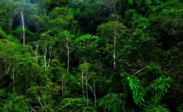 Jungle Wallpaper for Walls