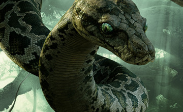 Kaa Wallpaper