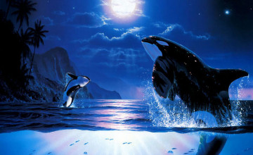 Killer Whales Wallpaper