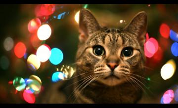 Kitty Christmas Wallpaper for Desktop