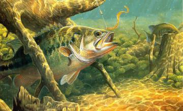 Largemouth Bass Fishing Wallpaper