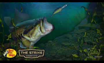 Largemouth Bass Wallpaper HD