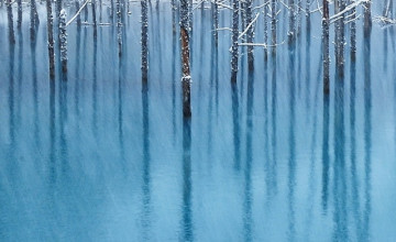 Larson Wallpaper Winter Trees