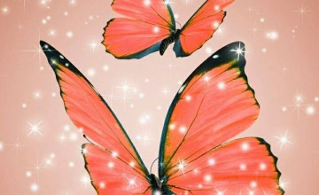 Latest Butterfly Wallpapers