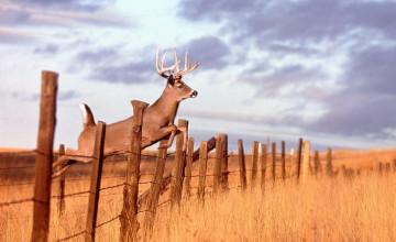 Live Hunting Wallpaper
