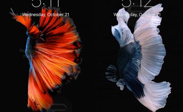 Live Wallpaper iPhone 6 Plus