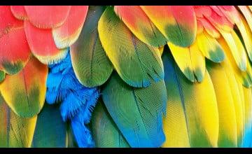 Macaw Parrot Wallpaper