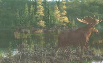 Moose and Cabin Wallpaper Border