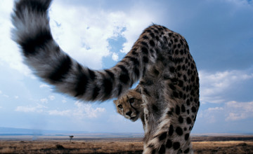 National Geographic Background Wallpaper Animals