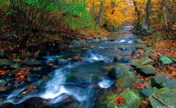 Natural Scenery Wallpaper