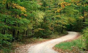 Nature Background Image