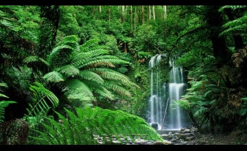 Nature Forest Wallpaper