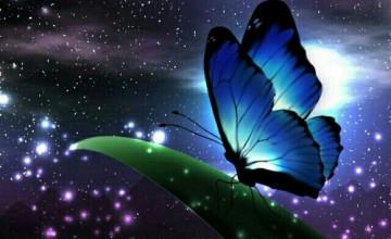 Night Butterfly Wallpaper
