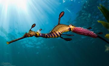 Ocean Animals Wallpapers