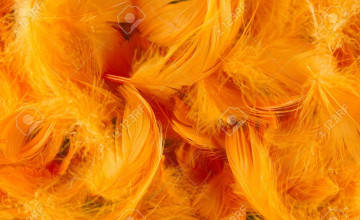 Orange Feather Wallpaper