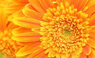 Orange Floral Wallpaper