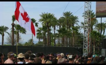 Palm Tree Wallpaper Canada