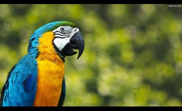 Parrot Backgrounds