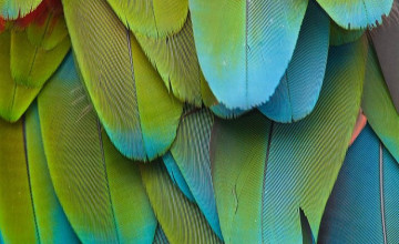 Parrot Feather Wallpaper