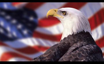 Patriotic Bald Eagle Wallpaper
